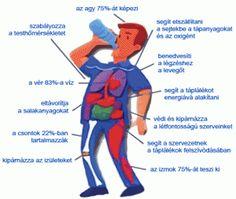 Hidratálás és edzés