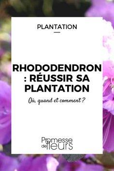 Le rhododendron est un arbuste de terre de bruyère à feuillage persistant et floraison colorée. Découvrez nos conseils pour bien le planter au jardin.