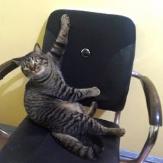 You cant sit here i already called dibs - http://cutecatshq.com/cats/you-cant-sit-here-i-already-called-dibs/