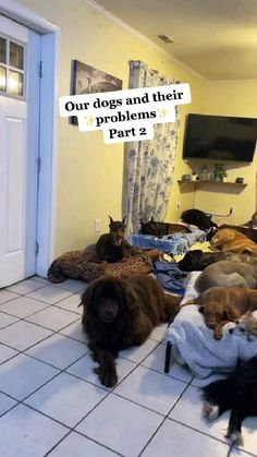 pet owners dogs and there problems🤣🤣
