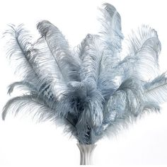 Ostrich Feathers - Set of 3 | Z Gallerie (52 CAD) found on Polyvore
