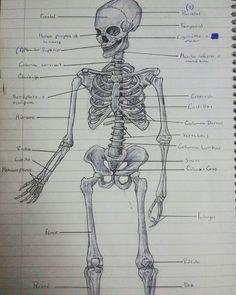 Estudio del Esqueleto