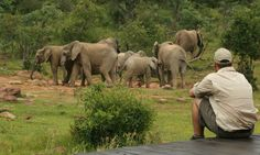 Makweti Safari Lodge is ideally positioned to explore the entire Welgevonden Game Reserve on the open safari vehicles accompanied by the professional game rangers. Safari Photo, Road Trip, Game Lodge, Close Encounters, Jet Lag, Game Reserve, Blog Voyage, Lodges, South Africa