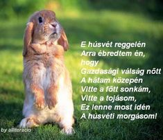 Happy Easter, Lol, Funny, Animals, Quotes, Laughing So Hard, Animais, Qoutes, Animales