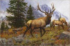 Elk  Rocky Mountain Elk oil painting by wildlife artist Bruce Miller