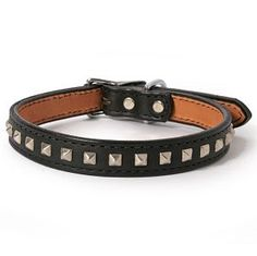 Pyramid Studs on Leather Dog Collar