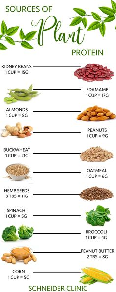 24 Sources of Plant Based Protein  #plantbased #healthy #health #cleaneating #food #recipe #cooking #exercise #workout #chiropractor #chiropracticcare #motivation #inspirational