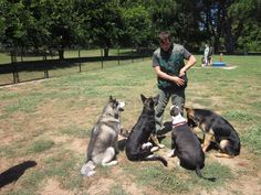 Local dog training classes. puppy training class, dog training classes near me
