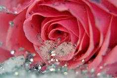 Love Story With Red Rose Photos and Wallpaper