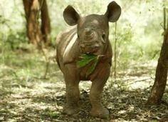 Please Sign & Share to Make Rhino Poaching a Felony in Mozambique. Goal: Increase the crime of rhinoceros poaching in Mozambique from a misdemeanor to a felony.