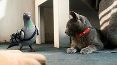 Grey Cat... Big Star!  Cats & Dogs: The Revenge of Kitty Galore