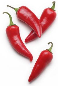 Chili frugter dyrket i drivhus