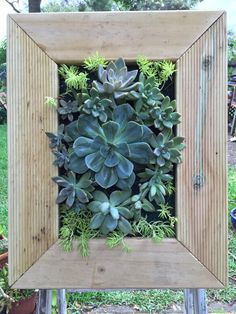 Living wall  Check For the love of succulents fb page for more  https://www.facebook.com/pages/For-the-Love-of-Succulents-the-living-wall/1603195046581892  Instagram: @FTLO_succulents