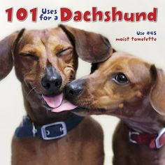 101 Uses For A Dachshund - Chewy.com