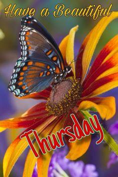 G Morning, Thursday Morning, Thankful Thursday, Happy Thursday, Good Morning Flowers Quotes, Thursday Images, Good Morning Greetings, Drinks Alcohol, Alcohol Recipes