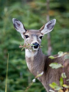 Don't feed the animals - Tips for creating a pest free garden #pestfreegarden #deerrepellant http://sulia.com/my_thoughts/43be93f0-9808-4137-948e-a6797943d4c4/?source=pin&action=share&btn=big&form_factor=desktop