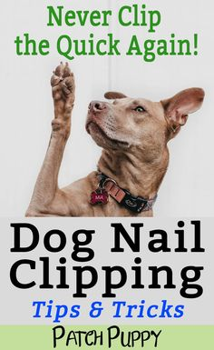 Cool Dog Nail Clipping Tips and TricksYou can find Pet grooming and more on our website.Cool Dog Nail Clipping Tips and Tricks Dog Grooming Tools, Dog Grooming Styles, Dog Grooming Supplies, Dog Supplies, Grooming Salon, Pet Sematary, Tips And Tricks, Easy Tricks, Cool Dog Tricks