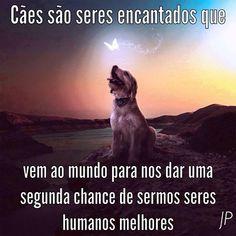 """Fica Cãomigo:""""A proteção dos animais faz parte da moral e da cultura dos povos """" (Vitor Hugo) """"Os animais esperam de nós o que nós esperamos dos anjos!"""" (Diele Rodrigues)"""