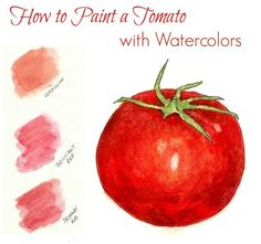 how to paint a tomato with watercolors. Great beginner's project