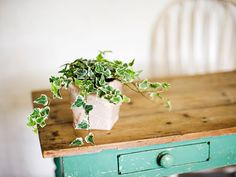 English Ivy | Adds timeless elegance to interior spaces while still being low-maintenance