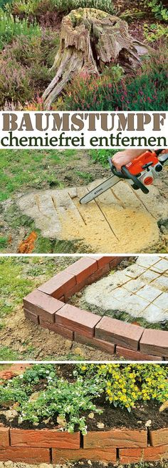 Remove stump- Baumstumpf entfernen Felling a tree is not difficult – remove the root all the more. However, the stump can also be removed without chemicals. We show you how to get rid of the stump easily and without much work. Rustic Gardens, Outdoor Gardens, Hanging Herbs, Landscaping Trees, Gardening Magazines, Garden Makeover, Garden Images, Woodland Garden, Planting Vegetables