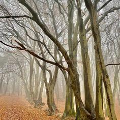 Hiken en biken door de bossen