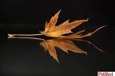simetrie | O frunza - PxlShot.ro