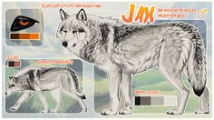 """ask and ye shall receive, jake Jake finally gets his own wolf, yay! """"What kind of wolf do you want to be? Cat And Dog Drawing, Anime Wolf Drawing, Big Wolf, Lone Wolf, Wolf Character, Character Sheet, Le Clan, Animal Drawings, Dog Drawings"""