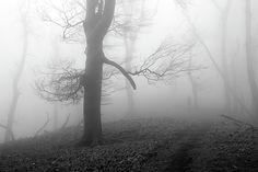 Mysterious forest by Ren Kuljovska Photos For Sale, Great Photos, Fine Art Prints, Framed Prints, Forest Art, Foggy Morning, Art Sites, White Art, Prints For Sale