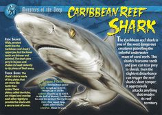 Name: Carribean Reef Shark Category: Monsters of the Deep Card Number: 20 Front: Caribbean Reef Shark Monsters of the Deep Card 20 front Back: Caribbean Reef Shark Monsters of the Deep Card 20 back Trading Card: Names Of Dinosaurs, Reef Shark, Whale Sharks, Whales, Types Of Sharks, Shark Facts, Underwater Creatures, African Cichlids, Wild Creatures