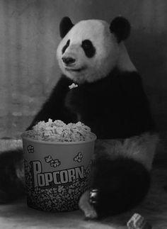 Imágenes divertidas de Osos Panda para descargar GRATIS.