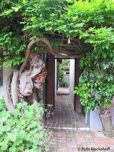 House covered with trees, Santa Barbara, California