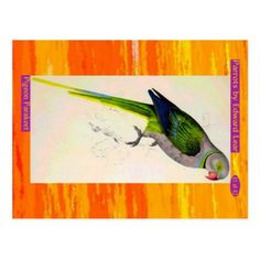 Edward Lear. Pigeon Parakeet. Postcard - postcard post card postcards unique diy cyo customize personalize