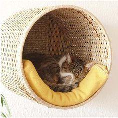 DIY Cat furniture #catsdiytreats