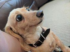 Подборка 20-ти забавных собакенов