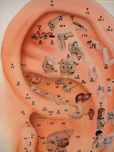 Acupuncture, Acupressure Treatment, Health Chart, Health Facts, Ear Reflexology, Nail Salon And Spa, Medical Wallpaper, Stress Relief Tips, Massage Therapy