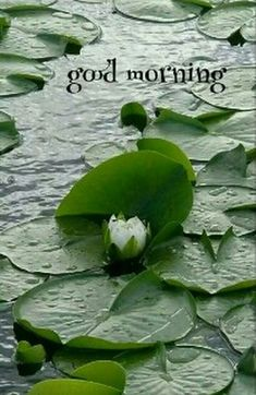 Good Morning Love Gif, Good Morning Friends Images, Latest Good Morning Images, Good Morning Nature, Good Morning Wednesday, Good Morning Image Quotes, Good Morning Beautiful Images, Good Morning Cards, Good Morning Images Download
