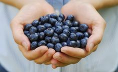 Looking for the best blueberry picking farms near Atlanta? Here's a great list plus how to keep them fresh and recipes to make the most of the fresh fruit. Blueberry Picking, Blueberry Juice, Blueberry Syrup, Vegan Blueberry, Low Cholesterol Diet, Cancer Fighting Foods, Foods To Eat, The Fresh, Superfoods