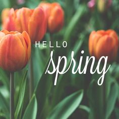 Happy first official day of Spring! Who's ready for nice weather? #hellospring #spring #sadiegreens