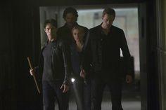 vampire, wolf, fairy, vampire - oh my!