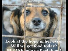 Please donate to buy food for the 600 + dogs at the shelter in Tuzla and to help stray and homeless animals in Tuzla - Bosnia and Hercegovina