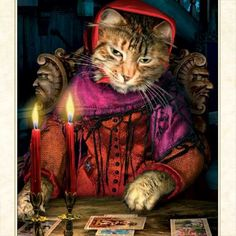 The Tarot Reader from the Baroque Bohemian Cats Tarot by BohemianCats via Etsy