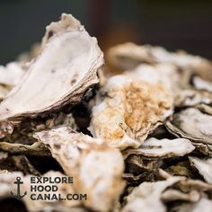 One of the best things about Hood Canal, long walks on the beach. More oyster discovery on our Instagram: https://instagram.com/explorehoodcanal