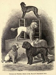 Whippet History References: Group of Mr. Walton's Performing Dogs -- 1878