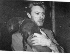 Doxie Domination - David Bowie and dachshund David Bowie, Dog Love, Puppy Love, Gato Animal, Weenie Dogs, Doggies, Dachshund Love, Dapple Dachshund, My Face Book
