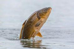 Fishing Uk, Fishing Girls, Fishing Stuff, Fishing Photography, Letting Go Of Him, Beautiful Fish, Colorful Fish, Underwater, Animals