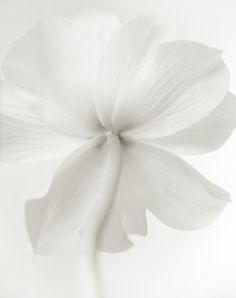 « Il n'y a rien de plus fort au monde que la douceur. »  Han Suyin