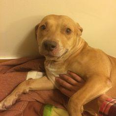 Sasha | Posh Pets Rescue NY NY