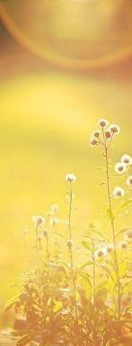 Yellow flowers in the yellow sunshine.- #yellow - ☮k☮