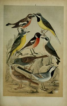 Vollständige Naturgeschichte der deutschen Zimmer, Haus- und Jagdvögel : - Biodiversity Heritage Library